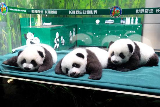 广州长隆野生动物园成人门票(平日)